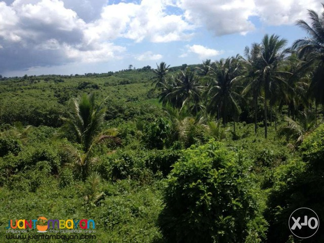 For Sale 17,970 hectares Located at Sipocot, Camarines Sur