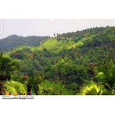 For Sale 169 hectares @ San Pablo City, Laguna