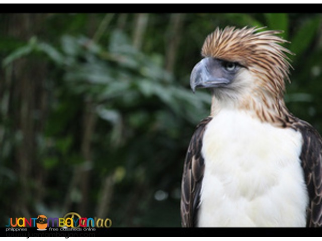 Covering Highlights, Davao tour packages - Davao City