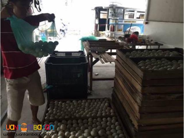 Balut sa Puti, Penoy at Itlog na Maalat