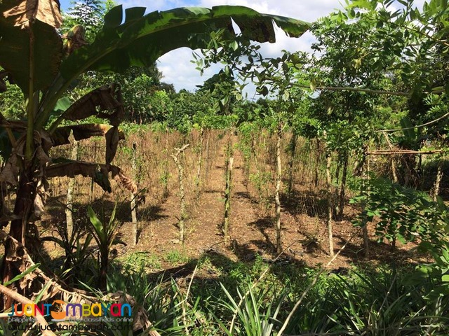 Farm Lot For Sale in Esperanza Alfonso Cavite