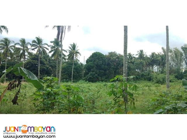 Farm lot near FEU Silang,pwede tayuan ng dormitory.