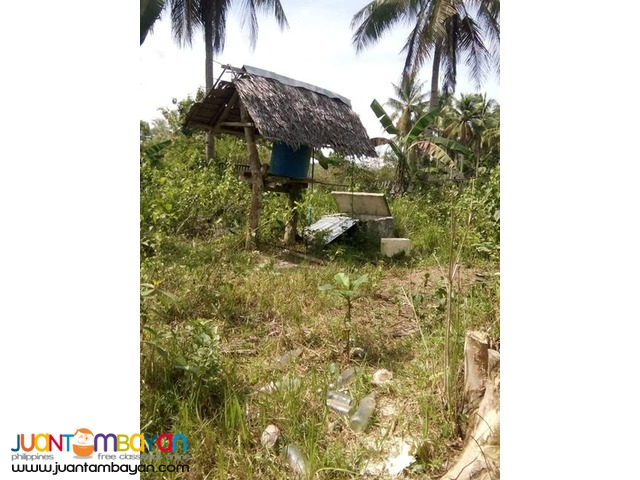 3,000 sqm house and lot with piggery in Trinidad bohol