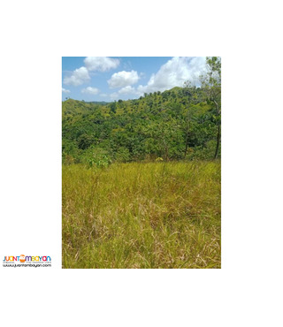 30 HECTARES FARM LAND IDEAL FOR ECO-TOURISM IN BUENAVISTA BOHOL