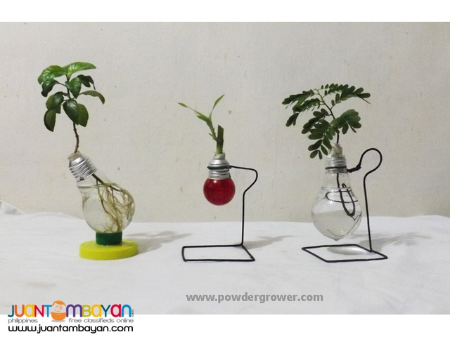 Powder Grower for Water Bonsai