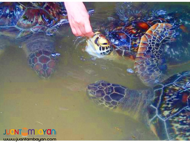 Bali Indonesia Tour, Turtle Island and Nusa Dua Tour