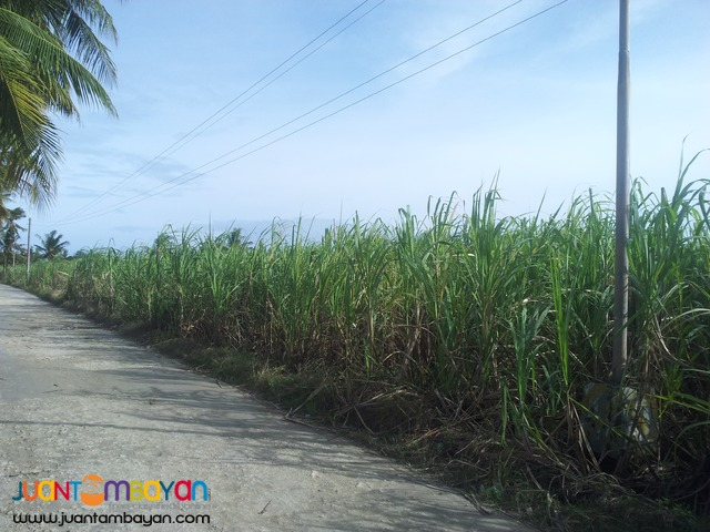 1.8 hects lot for sale in Danao,Cebu