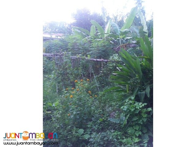 1,000 sq.m lot for sale in Garing, Consolacion,Cebu