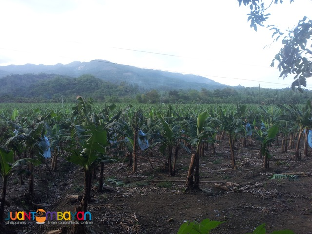 15 hectares for sale in Carmen, Cebu
