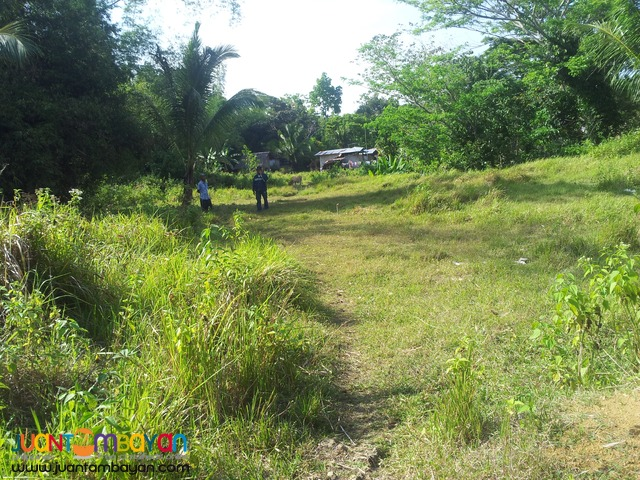 20 hectares for sale in sogod,cebu