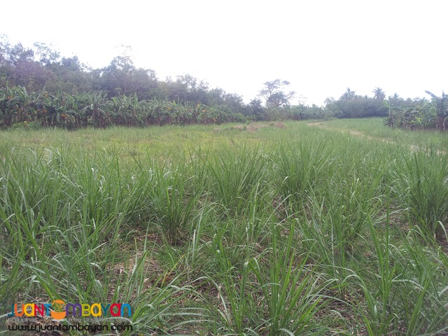 120 hectares lot for sale in bogo,cebu