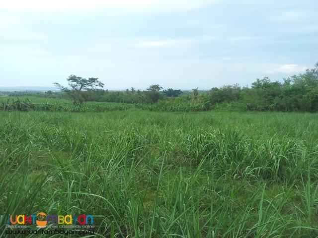 120 hectares lot for sale in bogo,cebu