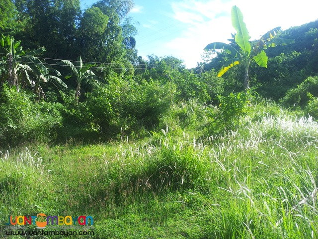 lot for sale 6,896 sq.m in cabangahan
