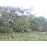 76,273 sq.m lot for sale in Paril, Cebu