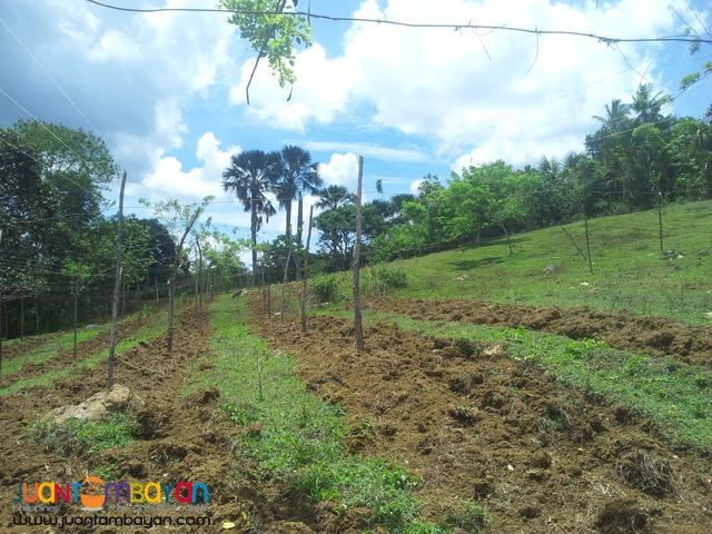 76,273 sq.m lot for sale in Paril, Cebu
