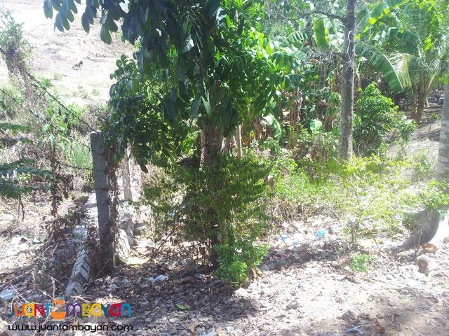 300 sq.m lot for sale in Tubod, Minglanilla